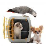Shipping pets, shipping cats, shipping puppies, shipping birds